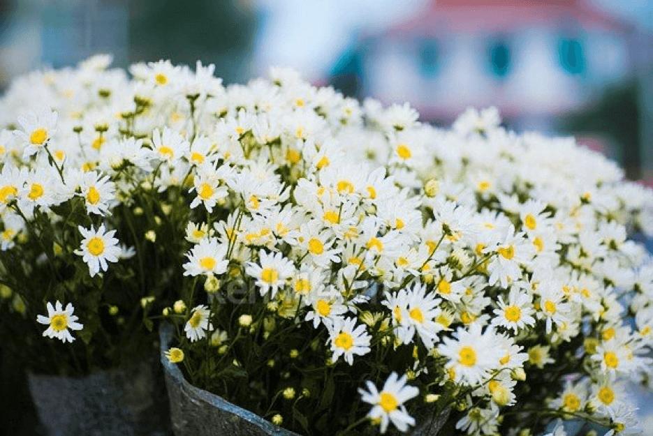 hoa tươi 20/10 cho những người phụ nữ cá tính, mạnh mẽ